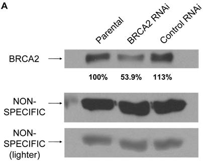 how to get rid of non specific bands in pcr