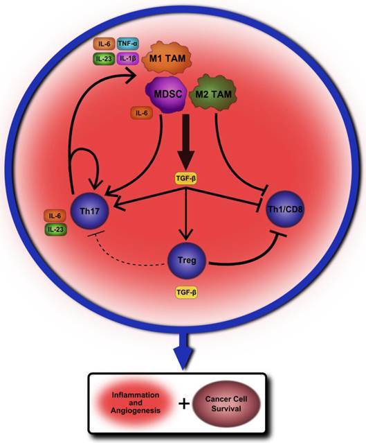 Dual Roles of Immune Cells and Their Factors in Cancer