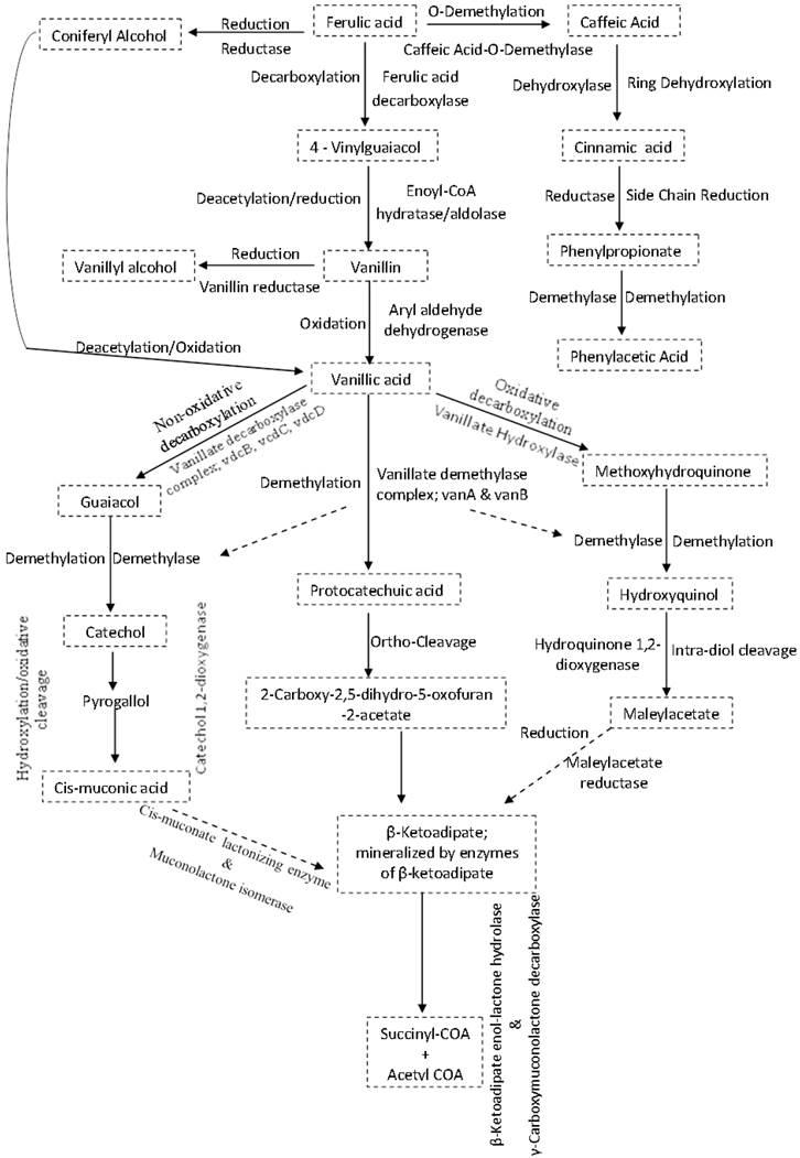 Molecular Adaptation Mechanisms Employed By Ethanologenic Bacteria