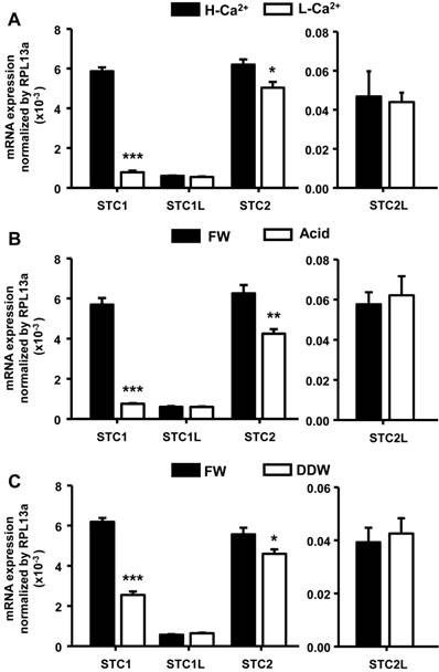 Stanniocalcin-1 Controls Ion Regulation Functions of Ion