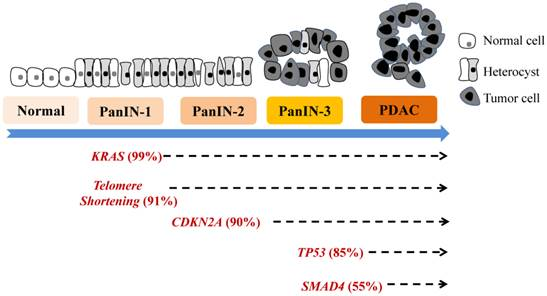 cdkn2a molecular biomarkers of pancreatic intraepithelial neoplasia and