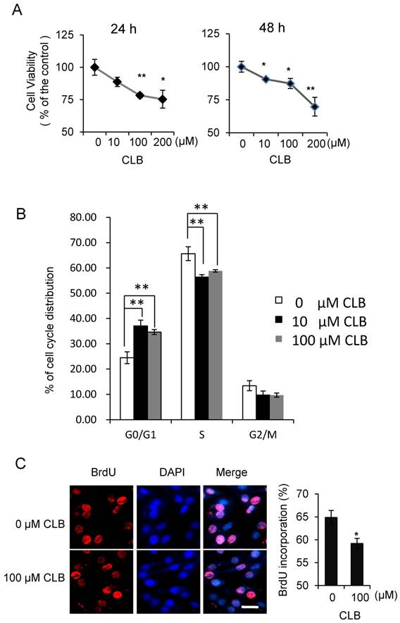 What Does Sd Mean >> Clenbuterol Induces Cell Cycle Arrest in C2C12 Myoblasts ...