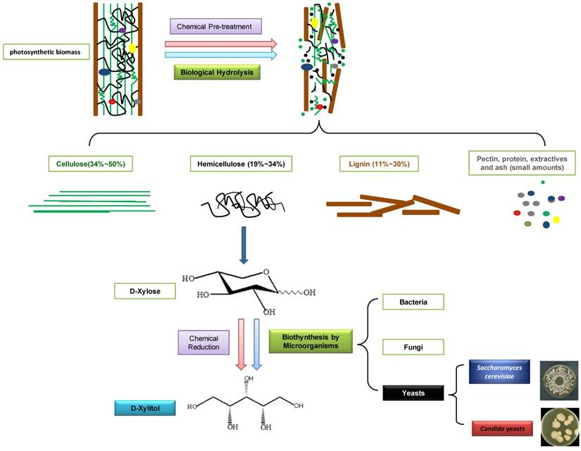 microbial bioconversion of steroids