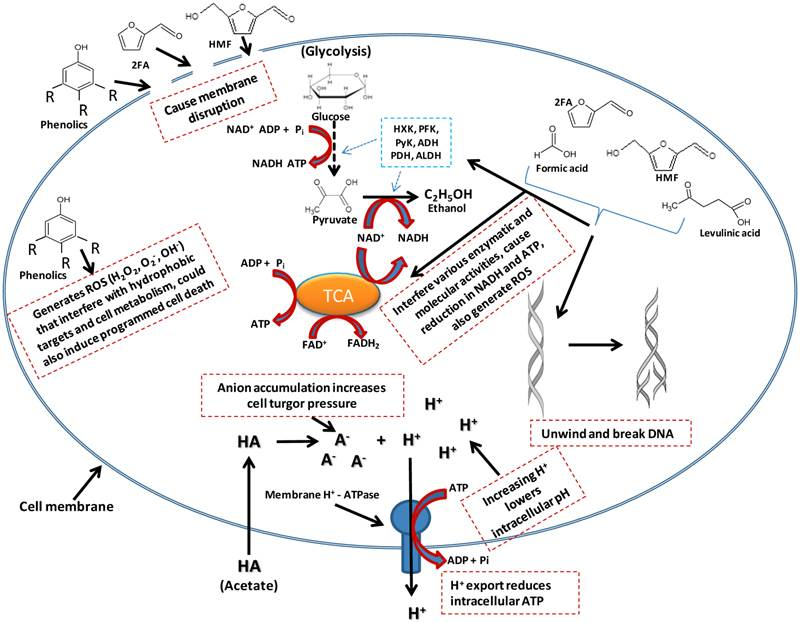 Fungi microbes diagram