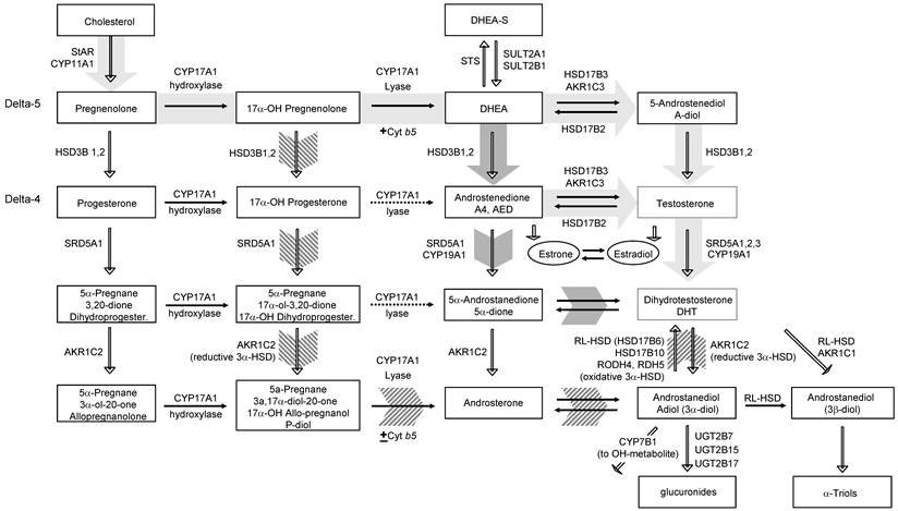 Int J Biol Sci Image