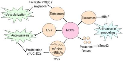 Exosomes In Mesenchymal Stem Cells A New Therapeutic