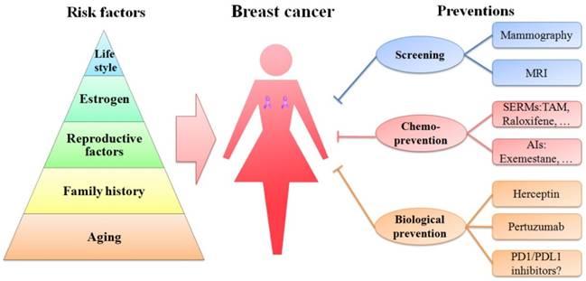 Breast cancer epidemiology herceptin