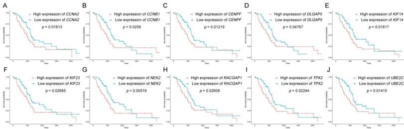 Ten hub genes associated with progression and prognosis of