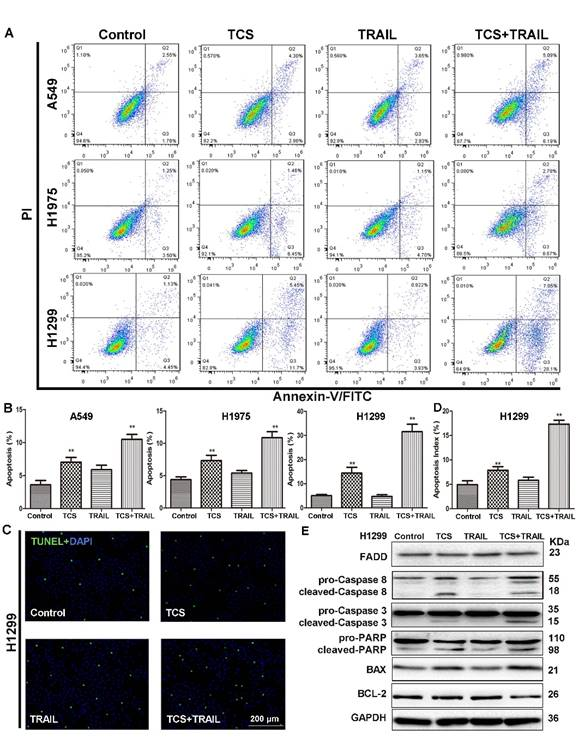 Trichosanthin enhances sensitivity of non-small cell lung cancer