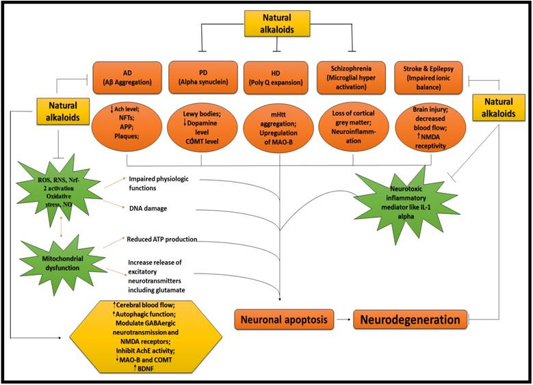 Role of Plant Derived Alkaloids and Their Mechanism in