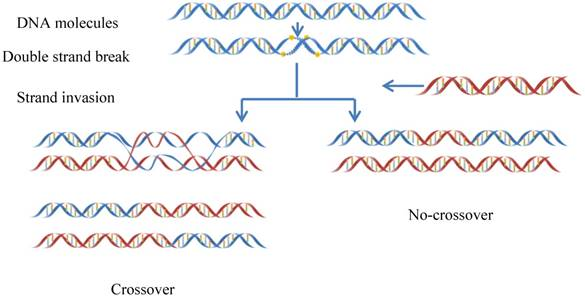 iRSpot-Pse6NC: Identifying recombination spots in