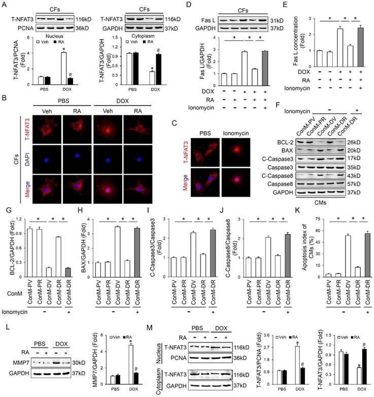 Rosmarinic acid alleviates cardiomyocyte apoptosis via cardiac