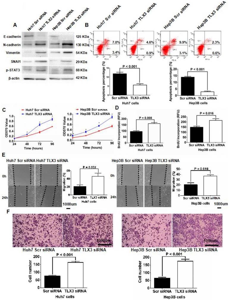 TLX3 repressed SNAI1-induced epithelial-mesenchymal
