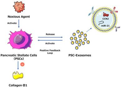 Exosomes and pancreatic diseases: status, challenges, and hopes