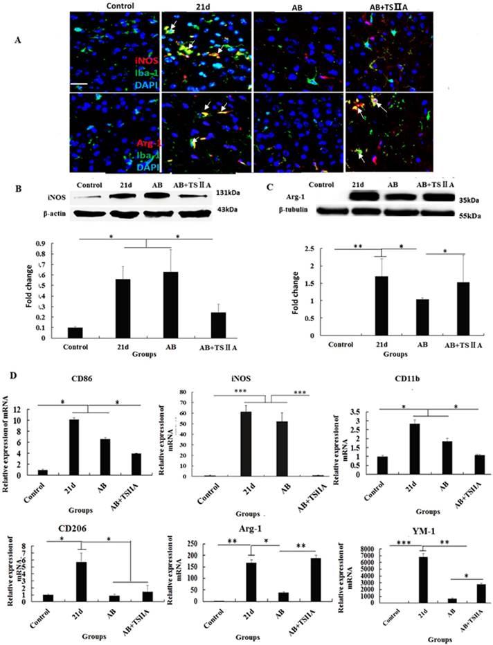 Tanshinone IIA Attenuates Demyelination And Promotes