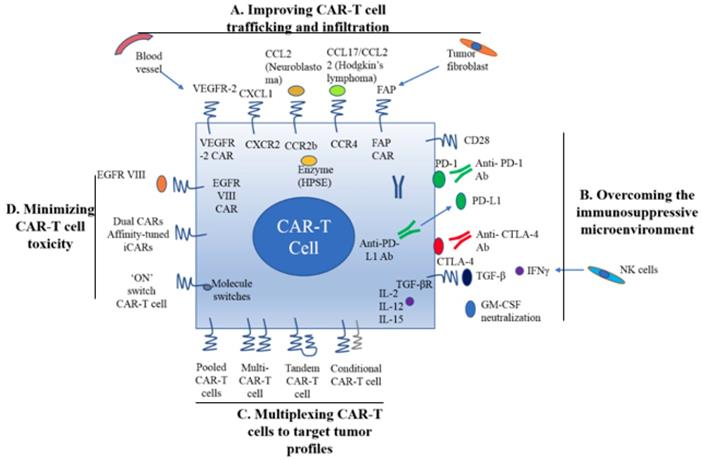 Current Progress In Car T Cell Therapy For Solid Tumors