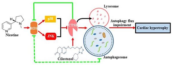(PDF) B7-H3 promotes colorectal cancer angiogenesis